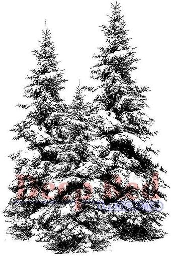 Spruce Tree 2 x 4 Deep Red Stamps 4X505538 Cling Stamp