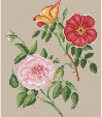 Copper and Virgin Rose Flowers - Cross Stitch Kit