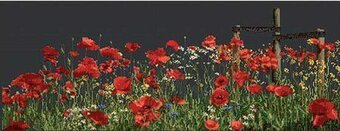 Poppies (Black Aida) - Cross Stitch Kit