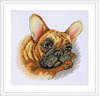 french bulldog puppies ct