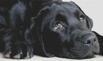 Black Lab Sighs - Cross Stitch Pattern