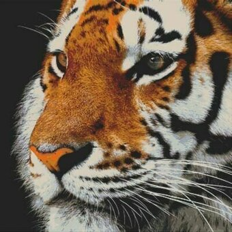 Tiger Portrait - Cross Stitch Pattern