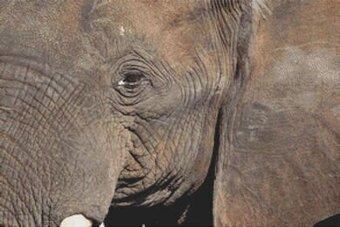 Through the Eye of an Elephant - Cross Stitch Pattern