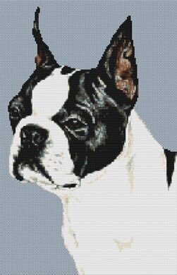 Boston Terrier - Cross Stitch Pattern