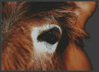 Through the Eyes -Donkey - Cross Stitch Pattern