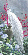 QS Lovers White Peacock - Cross Stitch Pattern