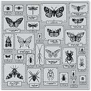 Bug Collection Bold Prints - Background Cling Stamp