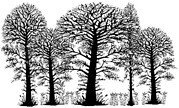 Trees - Lavinia Clear Stamp