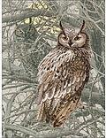 Eagle Owl - Cross Stitch Kit