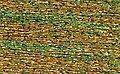 Rainbow Gallery Sparkle Braid - SK37 Confetti