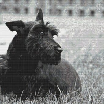 Fitz - Scottish Terrier - Cross Stitch Pattern